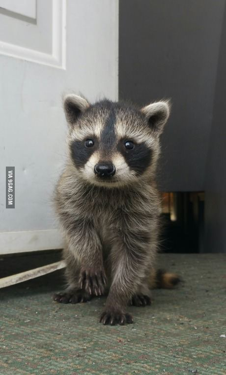 This orphaned baby came by for a visit over the weekend….