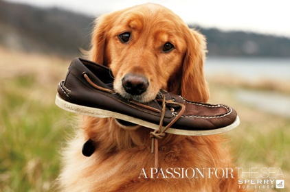 sperrys: Puppies, Favorite Things, Dogs, Boats Shoes, Golden Retrievers, Sperrys, Old Shoes, Furries Friends, Animal