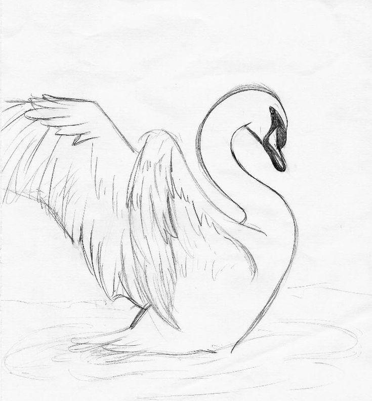 Das ist nur eine Skizze. Ich möchte 2 Schwäne in einen See malen und mit Wasser ausmalen.
