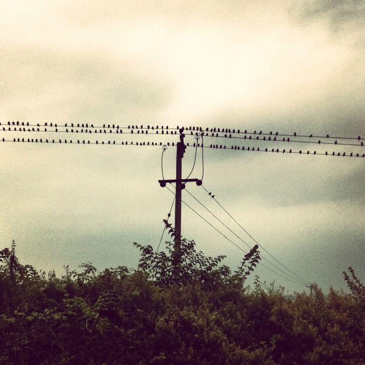 Birds on a line. Sweet.