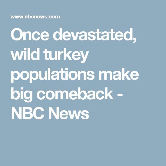 Once devastated, wild turkey populations make big comeback - NBC News