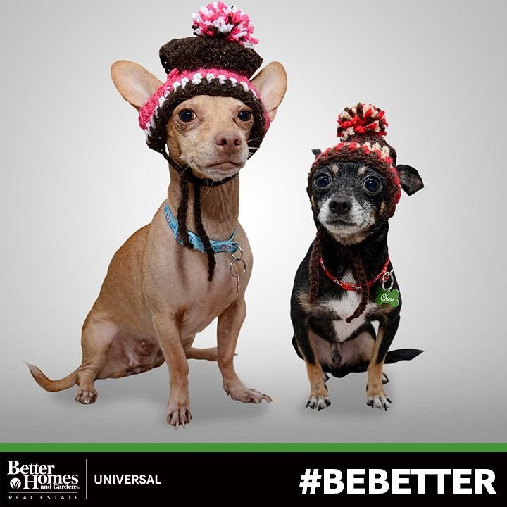 All Dressed Up And Nowhere To Go We Can Help You Find A New Home