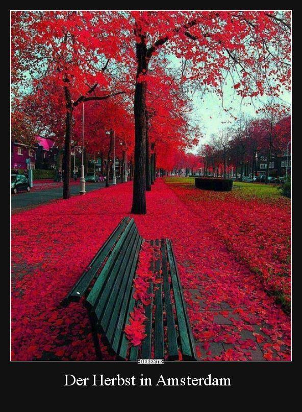 Der Herbst in Amsterdam.. | Lustige Bilder, Sprüche, Witze, echt lustig