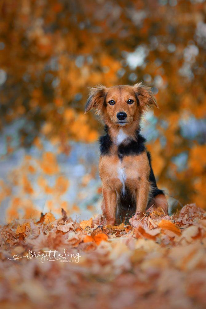 Dog Hund Hundefotoshooting Ellwangen Fotografinellwangen Photography Fall Herbst Besterfreund Brigittesi Haustierfotografie Tierfotografie Hundefotos
