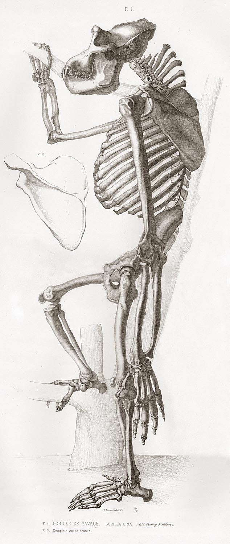 233 best Animals images on Pinterest | Animal anatomy, Animal ...