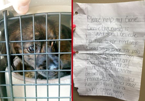 Paralyzed Dog Found Near Shelter With Crushing Note From Owner  http://animalbuzzer.com/paralyzed-dog-found-near-shelter-with-crushing-note-from-owner/