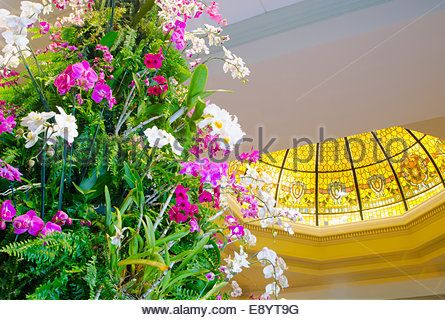 Orchid Christmas Tree: This spectacular Christmas Tree is made of tropical plants including orchids, ferns and bromeliads. - Stock Photo