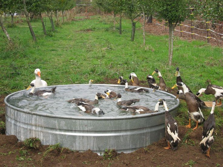 Duck pond duck duck g d u c k pinterest for Build your own duck house