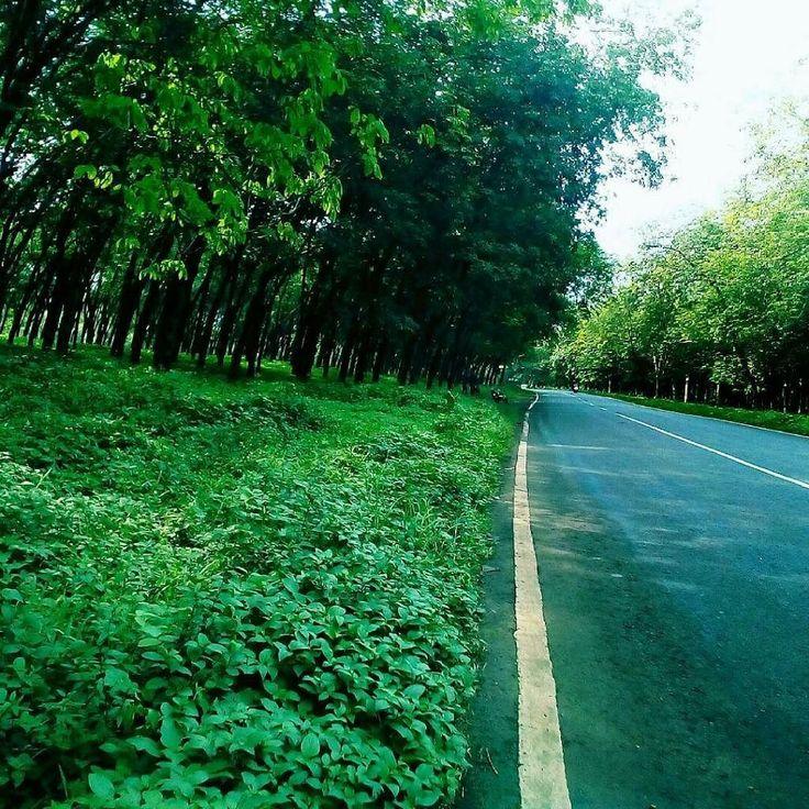 Hutan karet punya cerita. Lokasi: Keling Foto: @mintil666  #explorekeling #visitjepara #jatenggayeng #kompasnusantara