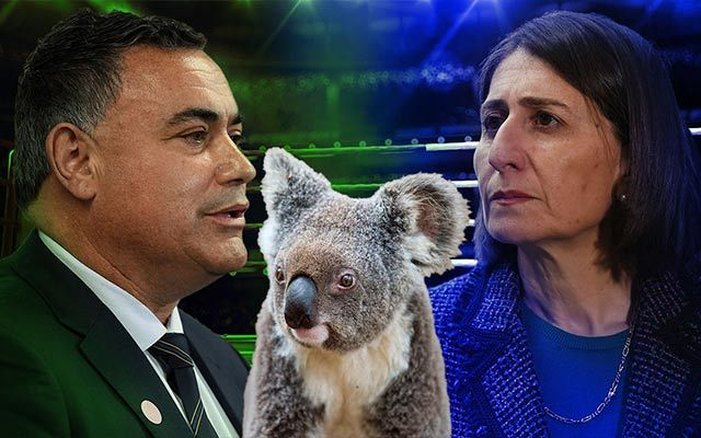 Can You Get Chlamydia From Kissing Someone Koala Protection Bill Splits Australian State Govt It Also Estimated That Roughly 5 000 Koalas Had Perished
