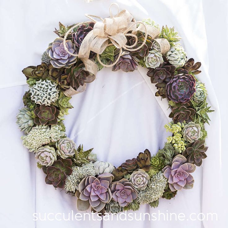 Succulent Wreath by Oasis Water Efficient Gardens - www.succulentsandsunshine.com