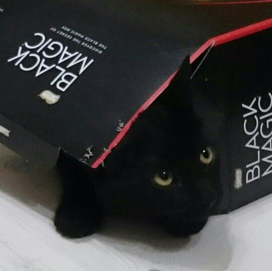 Bobby cat