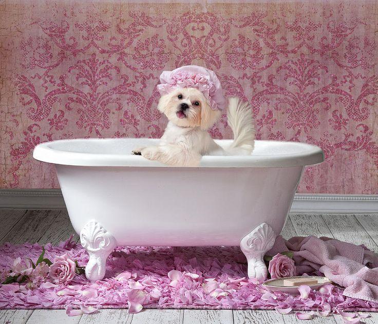 Pink Bath Painting by Lisa Jane