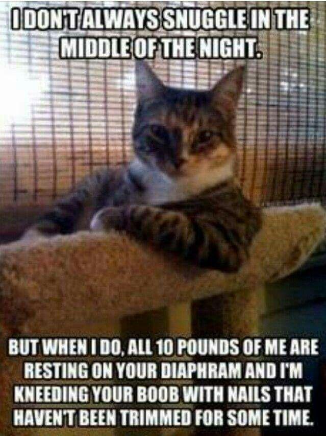 18 best Lame Jokes / Funny Memes images on Pinterest   Funny stuff ...