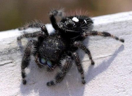 33 Best Pest Removal Images On Pinterest Pest Control