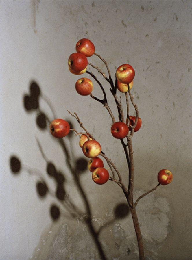 "Estelle HANANIA ,  ""Applecultree"" , 2007, Tirage Lambda satiné, 50 x 37 cm, Édition de 50"