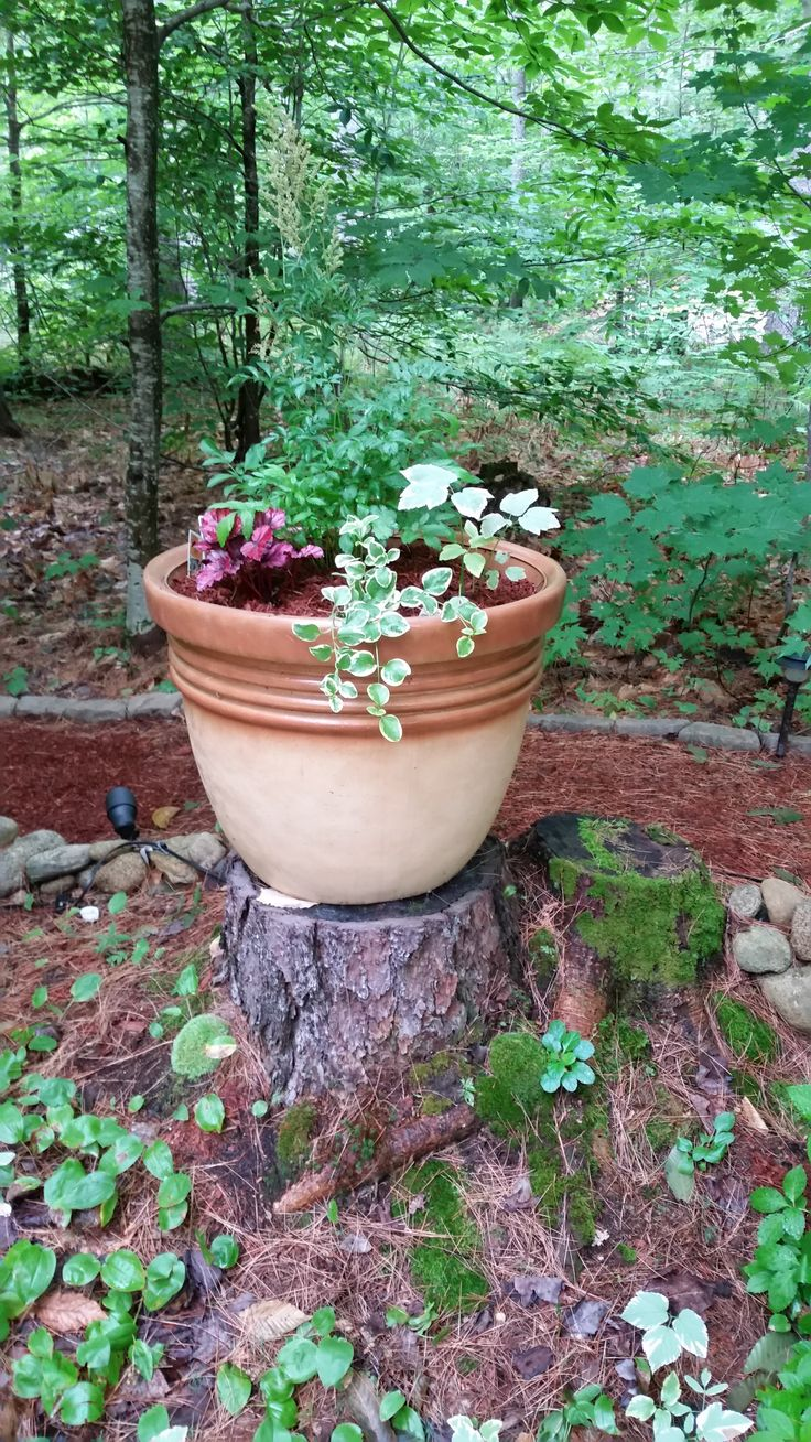 Tree Stump Seats 10 Best What To Do With The Cottonwood Tree Images On Pinterest