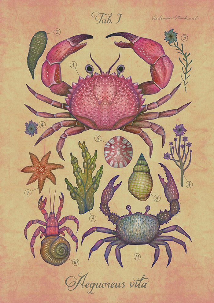 A series of colorful marine life illustrations depicting various shallow-water sea creatures.