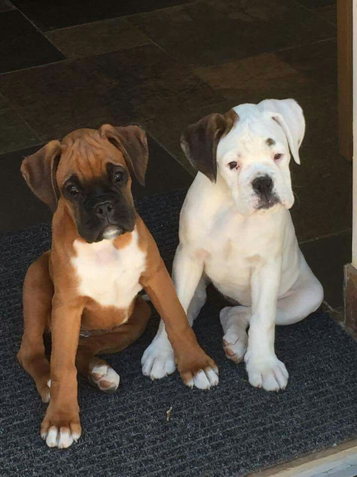 Poppy and Daisy - so darling!