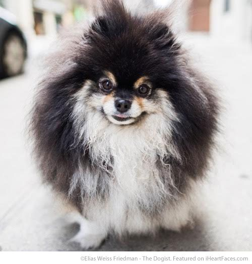Elias Weiss Friedman - The Dogist {I Heart Faces Photographer Spotlight Series} This pet photography inspiration is perfect for dog lovers!