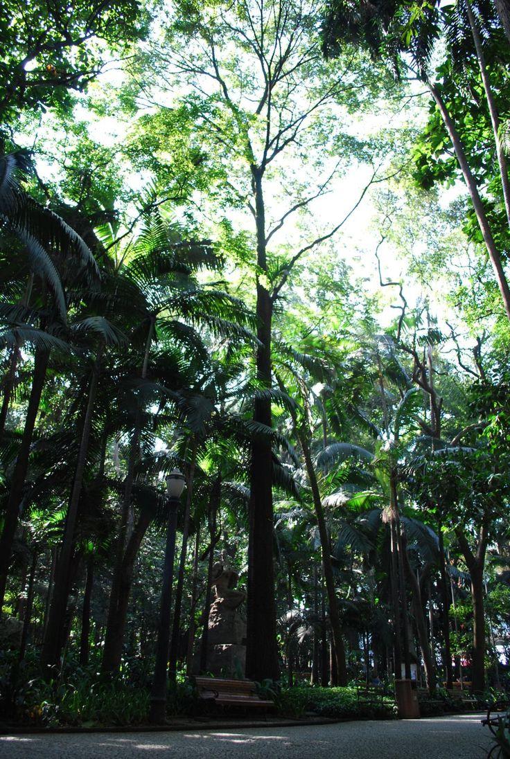 parque trianon - palmeiras invasoras - foto de ricardo cardim