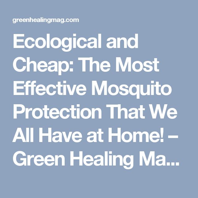 Ecological and Cheap: The Most Effective Mosquito Protection That We All Have at Home! – Green Healing Magazine