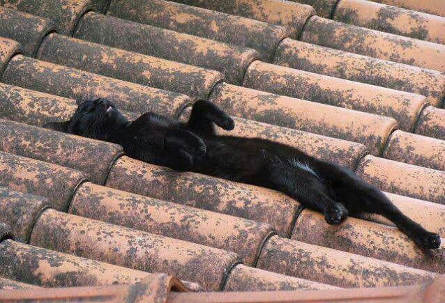 I love promoting black cats. So cute. Cats sleep anywhere. Incensewoman