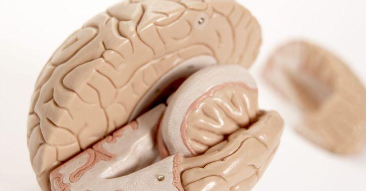 Cómo hacer un cerebro falso. Los cerebros falsos son un accesorio divertido para Halloween o una muy buena forma de darle realismo a tus películas u obras teatrales caseras. La mayoría de los cerebros falsos se elaboran con pan y pegamento, y es un proyecto muy simple en el que pueden participar los niños.