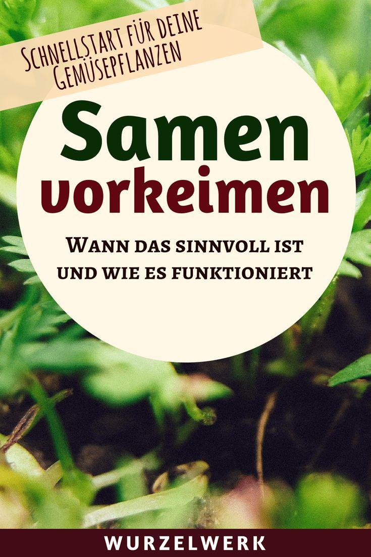 Samen vorkeimen: Schnellstart für deine Gemüsepflanzen – Roga Köln
