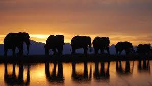 knysna-elephants - Google Search