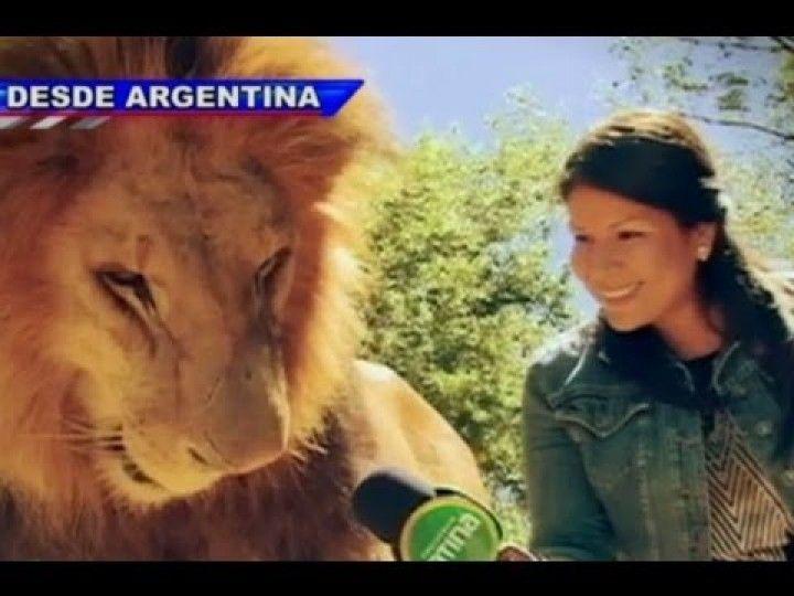 Zoologico de Lujan (Argentina) permite a sus visitantes, entrar a la jaula con los leones