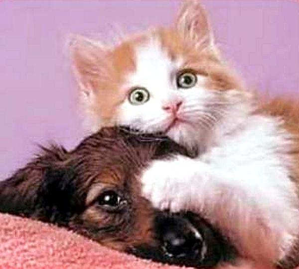 Niste pisici haioase au fost surprinse in pozele urmatoare