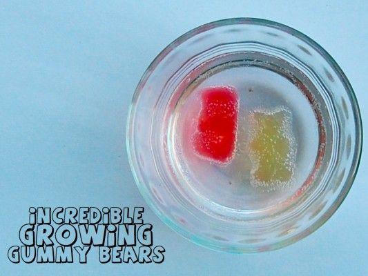 Gummy Bear Experiment: Gummy Bears, Gummy Bear Science Experiment, Gummy Bears Science Experiment, Science Experiments, Growing Gummy, Bear Experiment, Kid