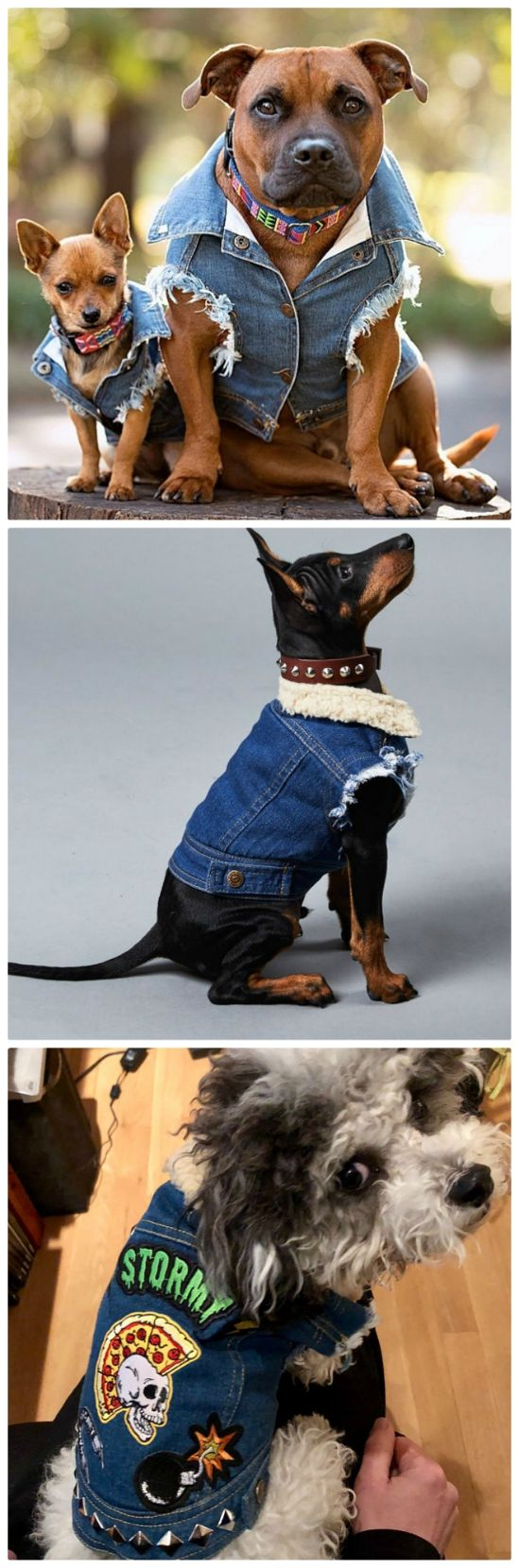 Denim Vests For Canines Cutest Assortment Of Concepts