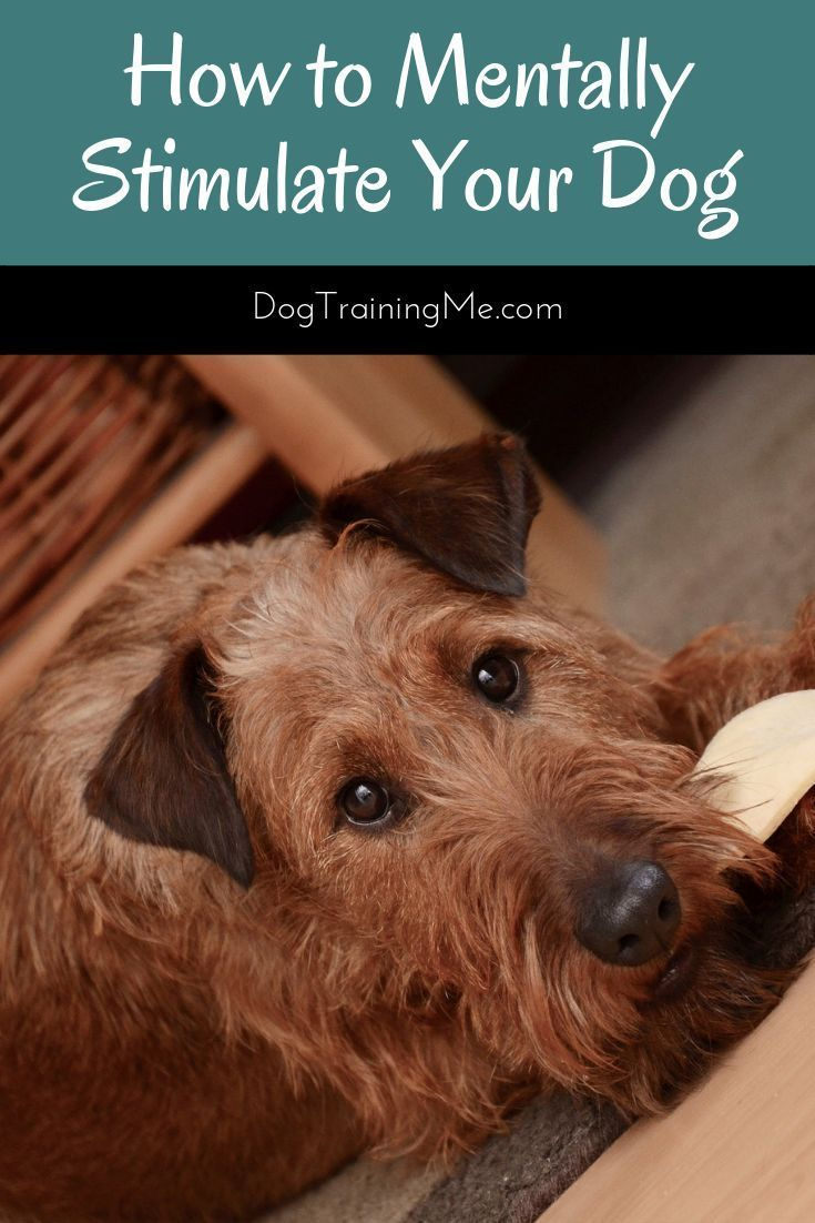 Pin On Helpful Pet Articles