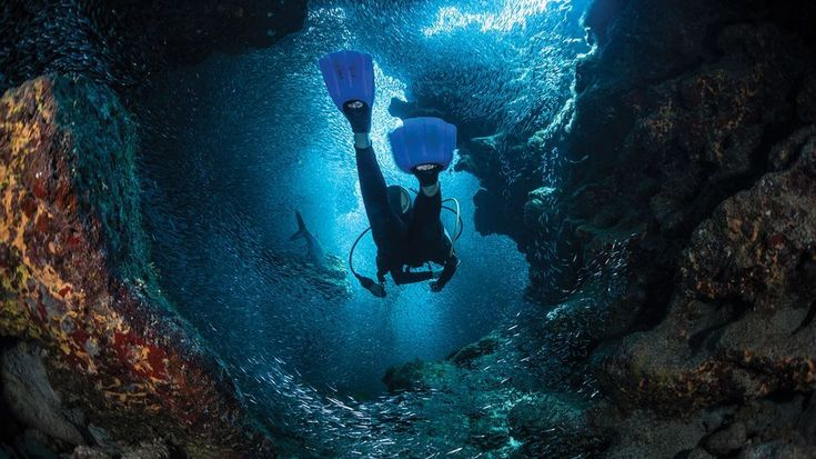 24 Reasons to Dive the Cayman Islands  Travel  2018 Scuba Diving Magazine Readers Choice Winner  With best-in-class viz some 500 fish species scores of reefs walls and wrecks its no surprise why divers love the Cayman Islands.  If you like our pins please follow us: http://ift.tt/2qGg6EH #ScubaDivingMagazine