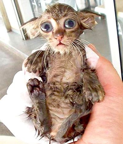 Wet kitten waiting to be dried. Let's all say 'awwwww' together now.