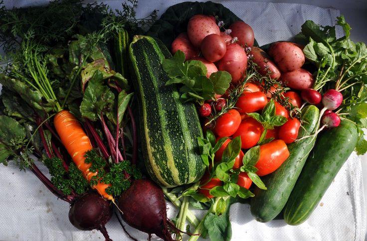 Su gastronomía se basa en platos vegetarianos, con sus propios cultivos y recolección de frutos y plantas que crecen en la zona.