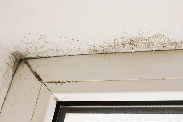 黒カビ の簡単除去法と予防策3つ 掃除 壁紙 カビ 黒カビ 窓