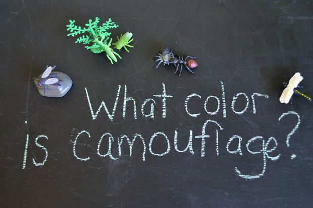 A wonderful inquiry-based exploration of all things camouflage…