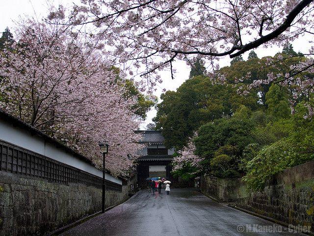 桜の飫肥城 (Obi Castle with Cherry blossoms) #Japan #Spring #Castle