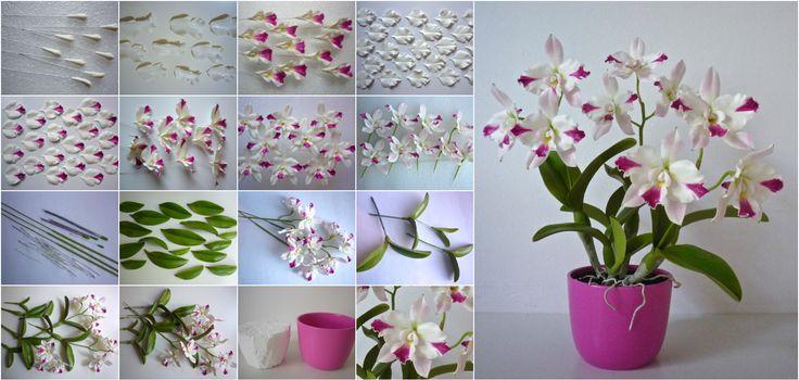Cattleya orchid  https://www.facebook.com/Csodavirag