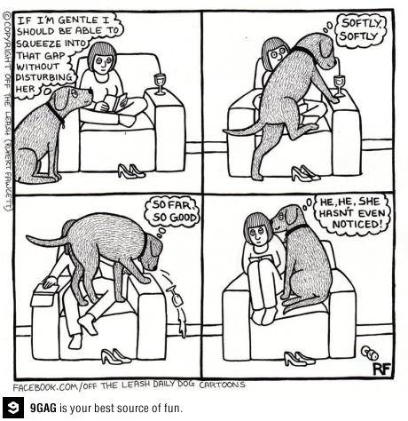 Every dog ever: