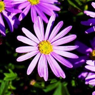 White Waratah Creations: February in the Australian garden