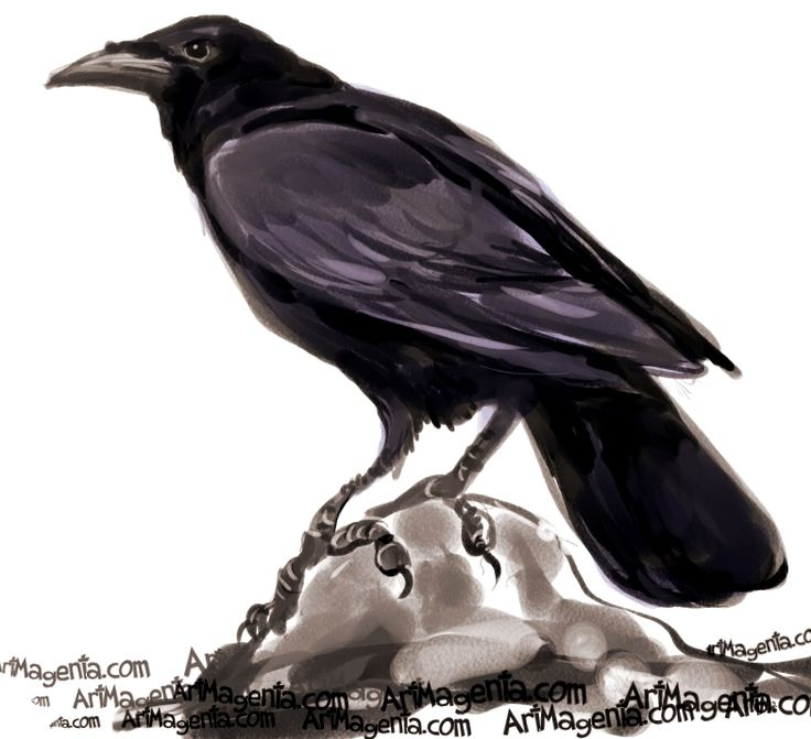 картинка или рисунок вороны промежутках