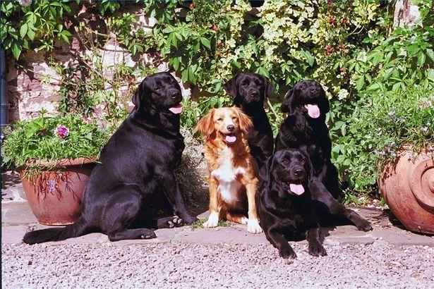 Best 25 dog friendly garden ideas on pinterest dog for Easy houseplants safe for pets