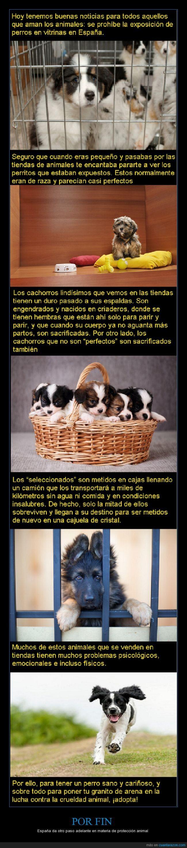 Nunca más verás perros en exposición en vitrinas - España da otro paso adelante en materia de protección animal   Gracias a http://www.cuantarazon.com/   Si quieres leer la noticia completa visita: http://www.estoy-aburrido.com/nunca-mas-veras-perros-en-exposicion-en-vitrinas-espana-da-otro-paso-adelante-en-materia-de-proteccion-animal/