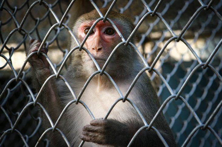 Tutastan.comприводит описание реального эксперимента, которые учёные проводили над обезьянами— самыми близкими «родственницами» людей среди животных. Его результат вас поразит. Как обезьяны демонстрируют основные понятия о человеке Клетка. В ней 5 обезьян. К потолку подвязана связка бананов. Под ними лестница. Проголодавшись, одна из обезьян подошла к лестнице с явными намерениями достать банан. Как только она дотронулась …