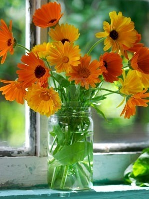 Calendula Flowers in a fruit jar....so typical for a country window. :-)