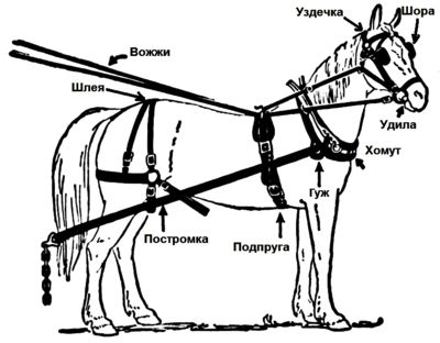 10 Mejores Imgenes De Horse Wagons En Pinterest
